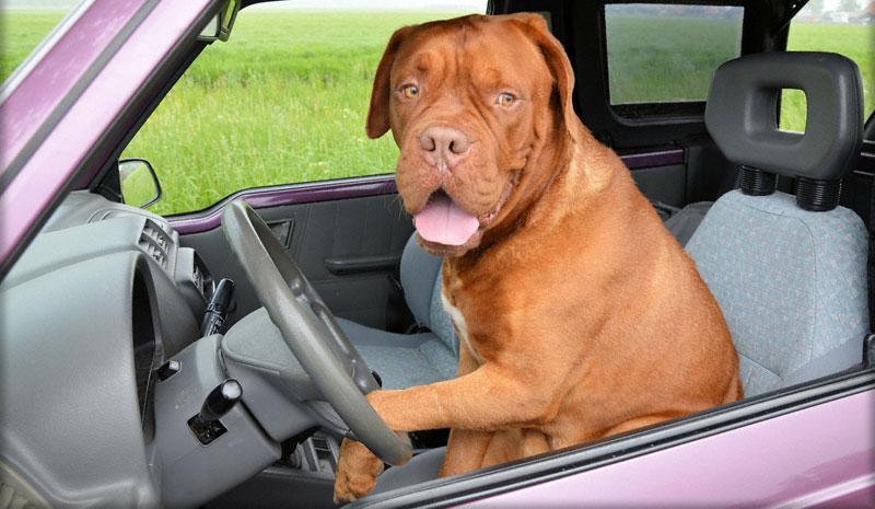 Тест на умение водить автомобиль предназначен для контроля водительской бдительности